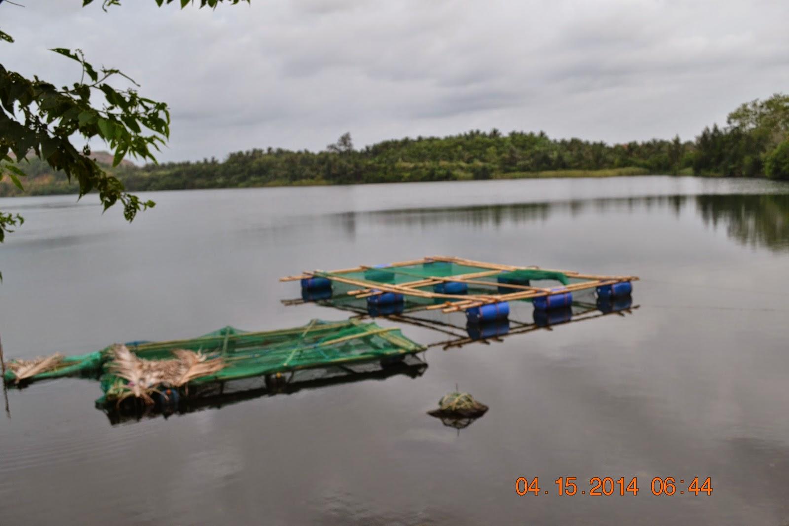Mambulaoans Worldwide Buzz Tilapia Fish Cage Project