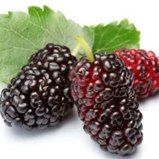 Manfaat Mulberry