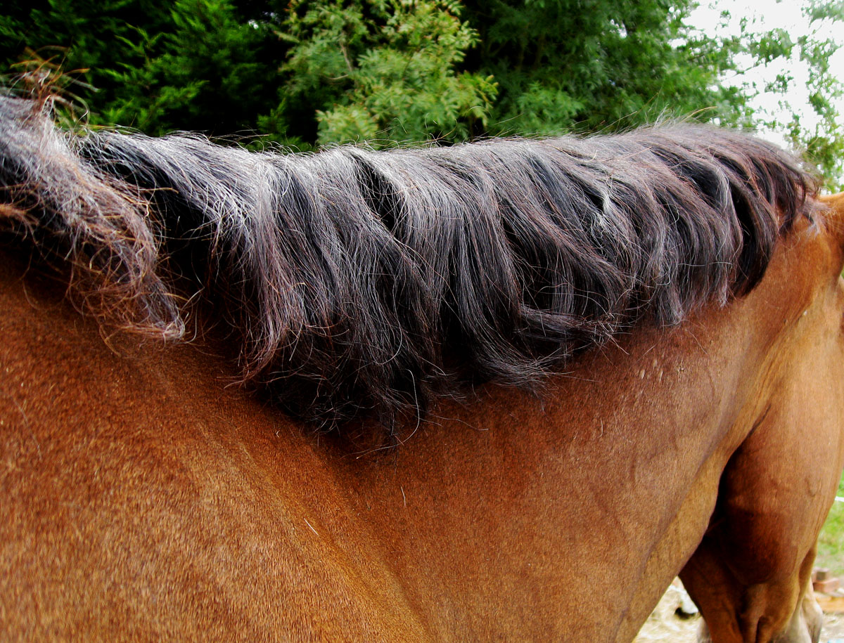 Horse Mane Braid Hairstyles