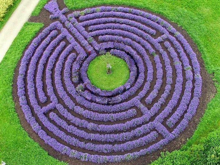 Lavender as hedging plants the garden of eaden for Garden labyrinth designs