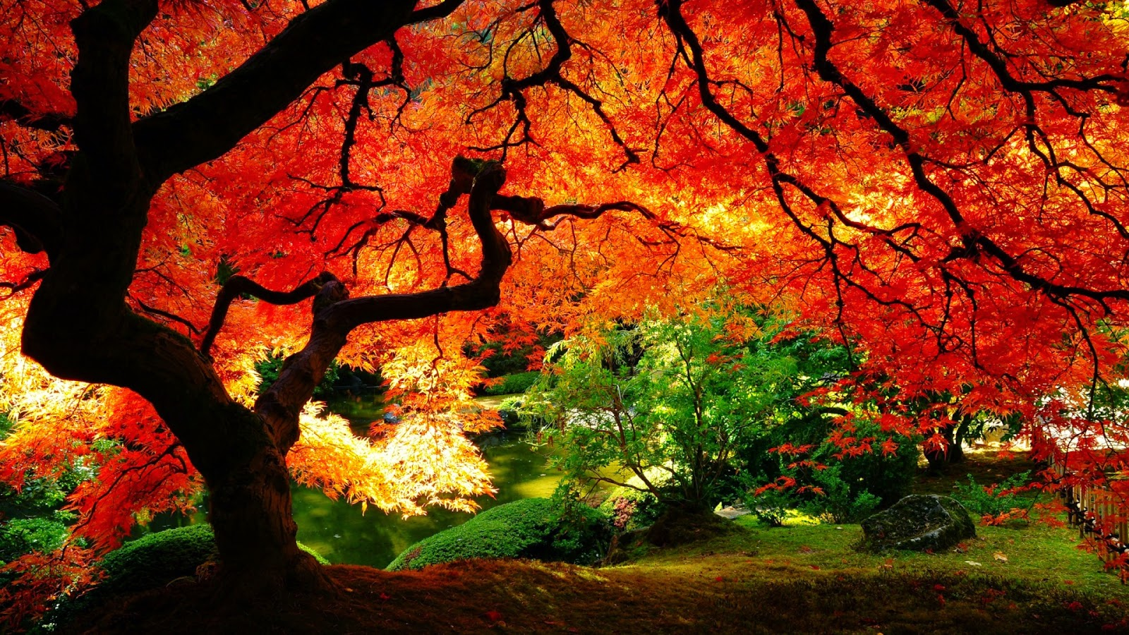 wallpaper of autumn season