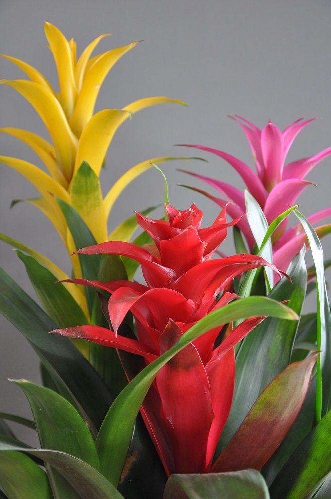My unsettling life 10 easiest plants to have indoors for Flowering plants for indoors