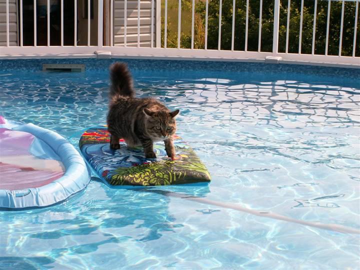 Кот-серфер в бассейне