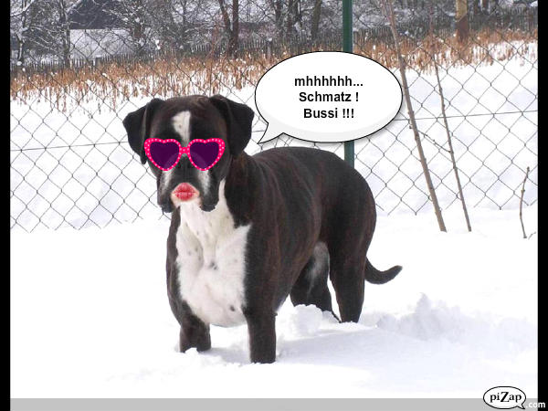 Boxer Ivy mit Sonnenbrille und Kussmund