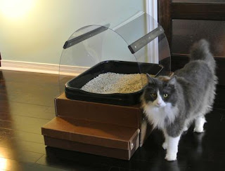 Cats Ask Litter Box