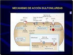 La Diabetes: Las Sulfonilureas