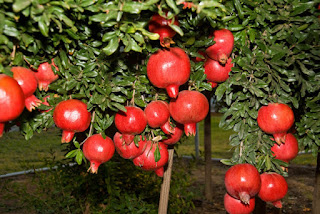 home garden stories, garden news, garden awesome, doug garden, garden story children, story about garden for kids, gardens for you,very sad story that will make you cry, very sad story tagalog, very sad story still crying, very sad story short, a very sad story about love, true sad stories, sad stories about death, the most sad love story