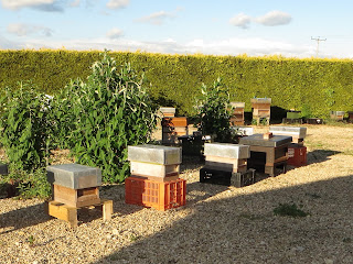 Nucs ready for transport to other beekeepers