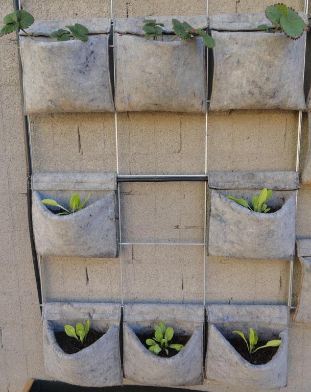 Huerto urbano en casa vertiflor for Jardin vertical de fieltro en formato kit