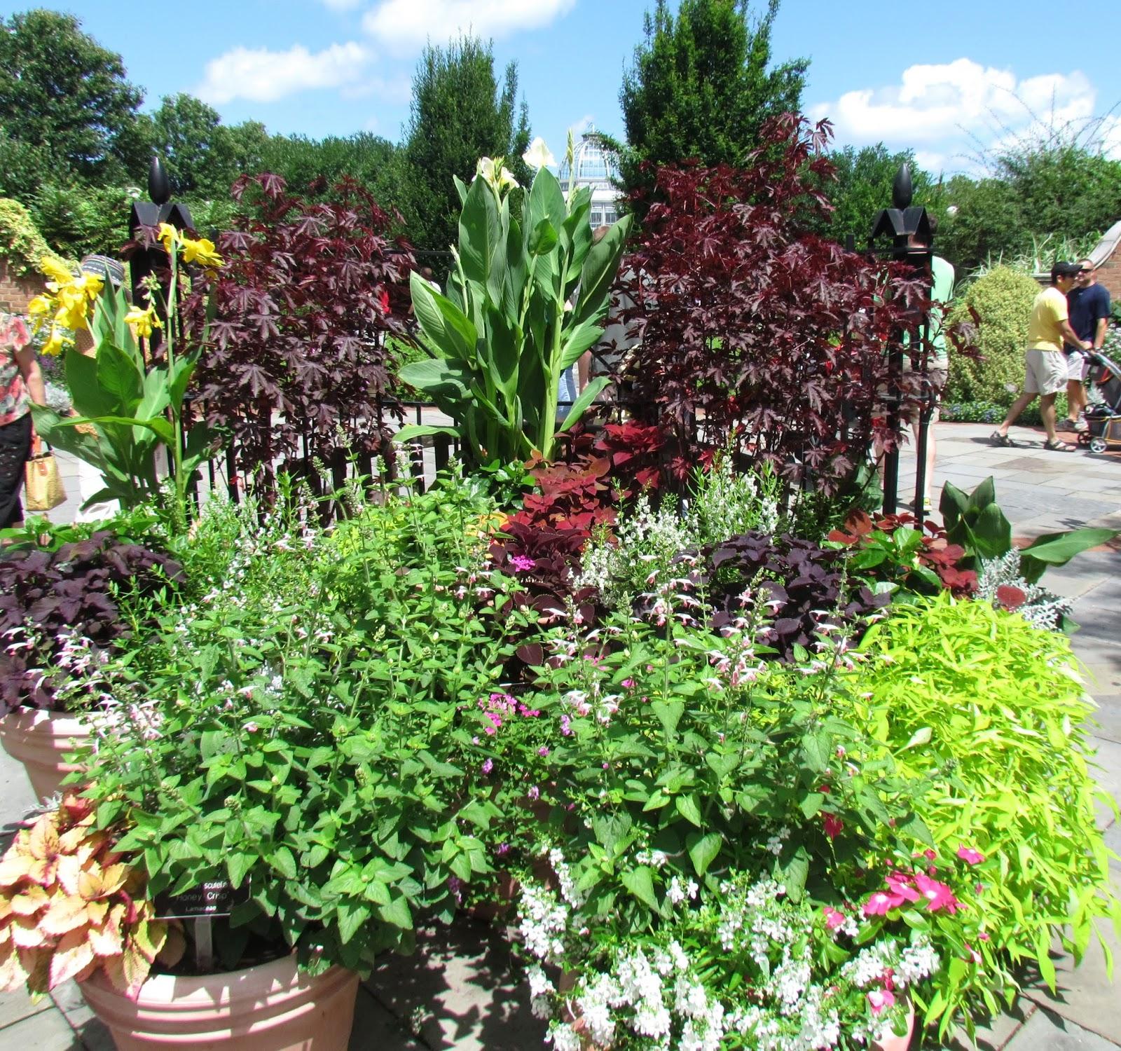 Viva La Hosta Lewis Ginter Botanical Gardens