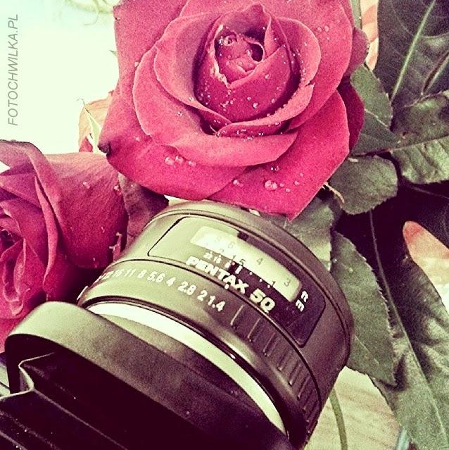 Aparat Pentax k5II z obiektywem Pentax 50 mm i mieszkiem do fotografii makro.
