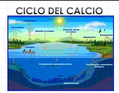 2.3 Ciclos biogeoquímicos. | Desarrollo Sustentable