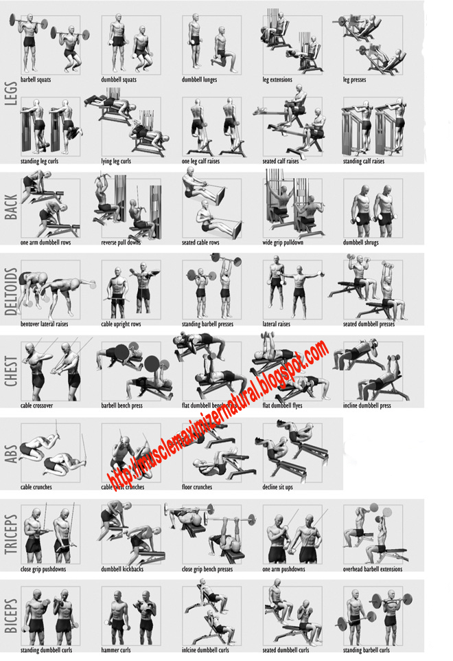 Body Building Exercises