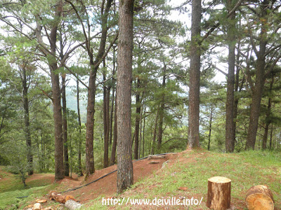 Travel Guide: The Manor at Camp John Hay [May 2011] 26