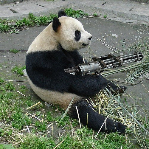 Panda bear funny - photo#11