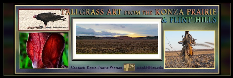 Fine Art in the Flint Hills