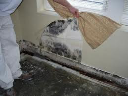 Black mold removal columbus black mold removal columbus for Bleach on concrete floor