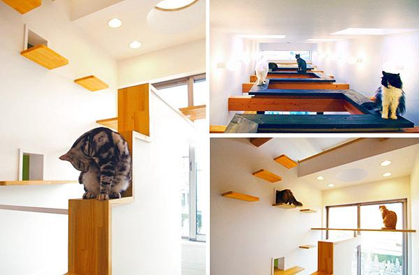 A Pets World News L Cat Dog Friendly Home