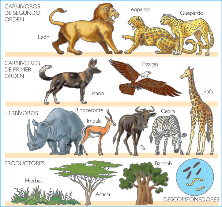 fotos animales herbívoros - Fotos de dinosaurios: carnívoros y herbívoros