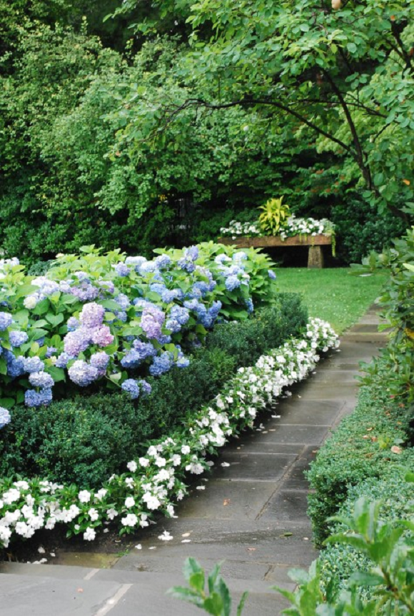 Landscaping With Boxwoods And Roses : Calling it home which boxwood where