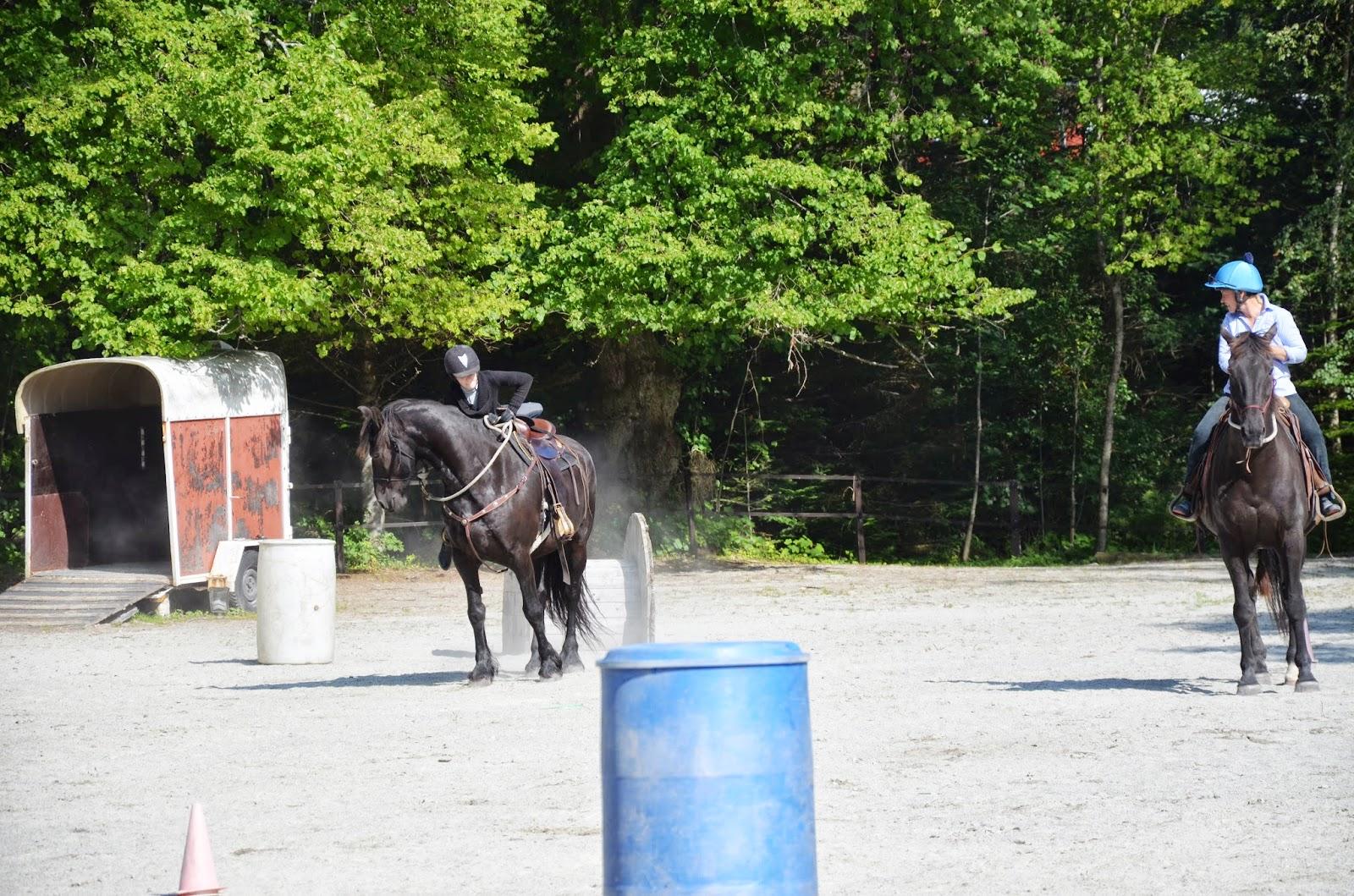 hest napper i tøylene