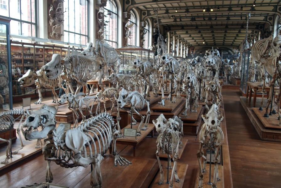 Museum Histoire Naturelle Paris Paris Muséum D'histoire