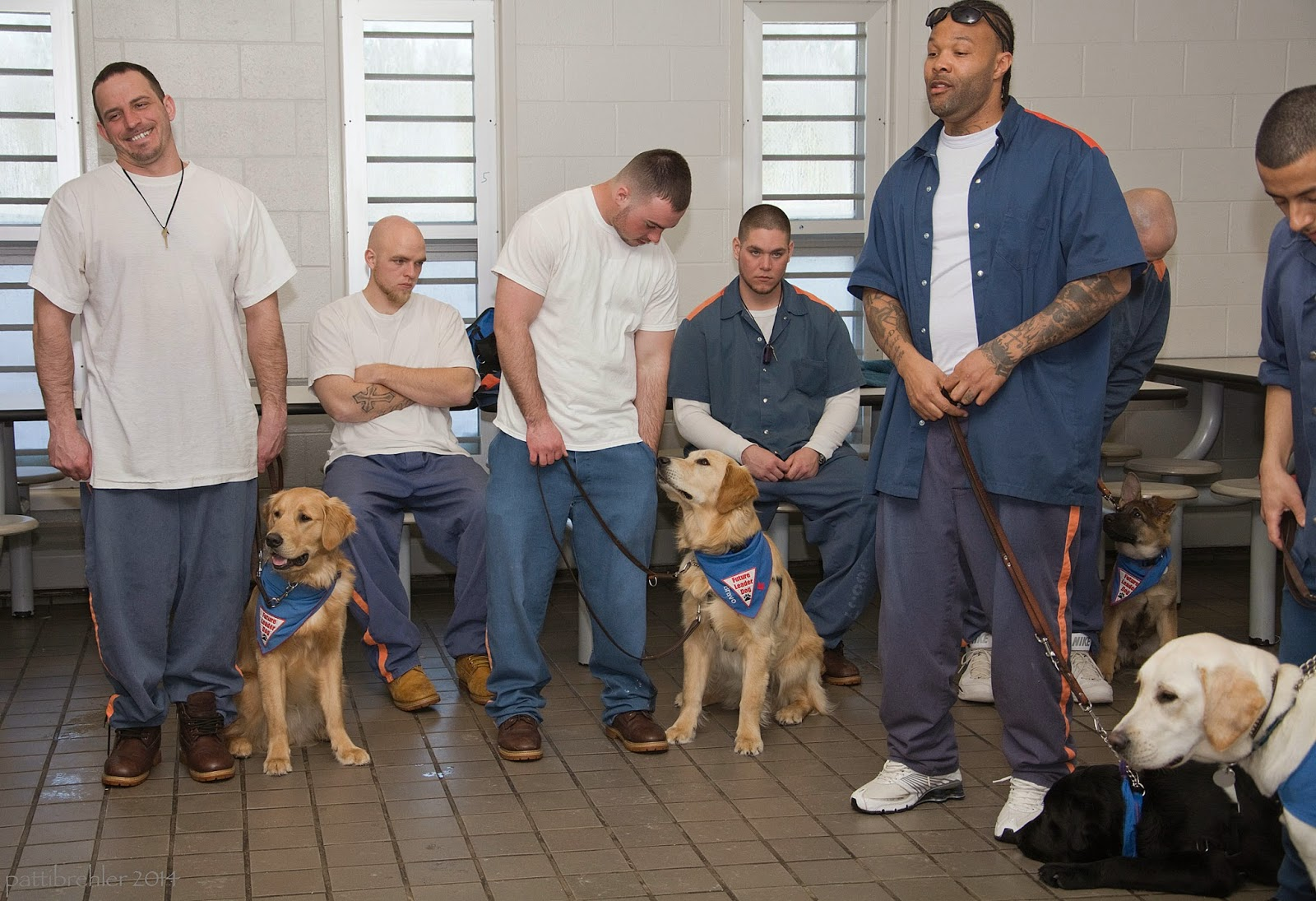 Three men are standing in a row, a fourth is just out of the frame on the right side. Two other men are sitting behind and between the standing me. They are wearing prison blue pants and white t-shirts. The third and forth man (from left to right) are wearing the prison blue shirts over their t-shirts. The first two men have golden retriever puppies (almost adult) sitting on their left sides, they pups are wearing blue Future Leader Dog bandanas. The third man, and african american, has a black lab that is lying on the floor at his left side. The man just out of the frame has a yellow lab next to him, but you can only see her head. The men sitting down do not have puppies, they are just observing.