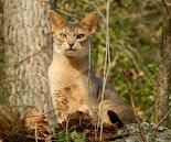 Hisia - Je suis un Travelling Cat