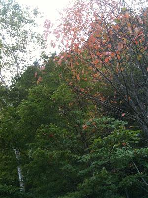 紅葉。奥多摩周遊道路・都民の森にて