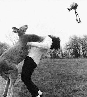 Animales ahuyentando a las personas - WTF - 7