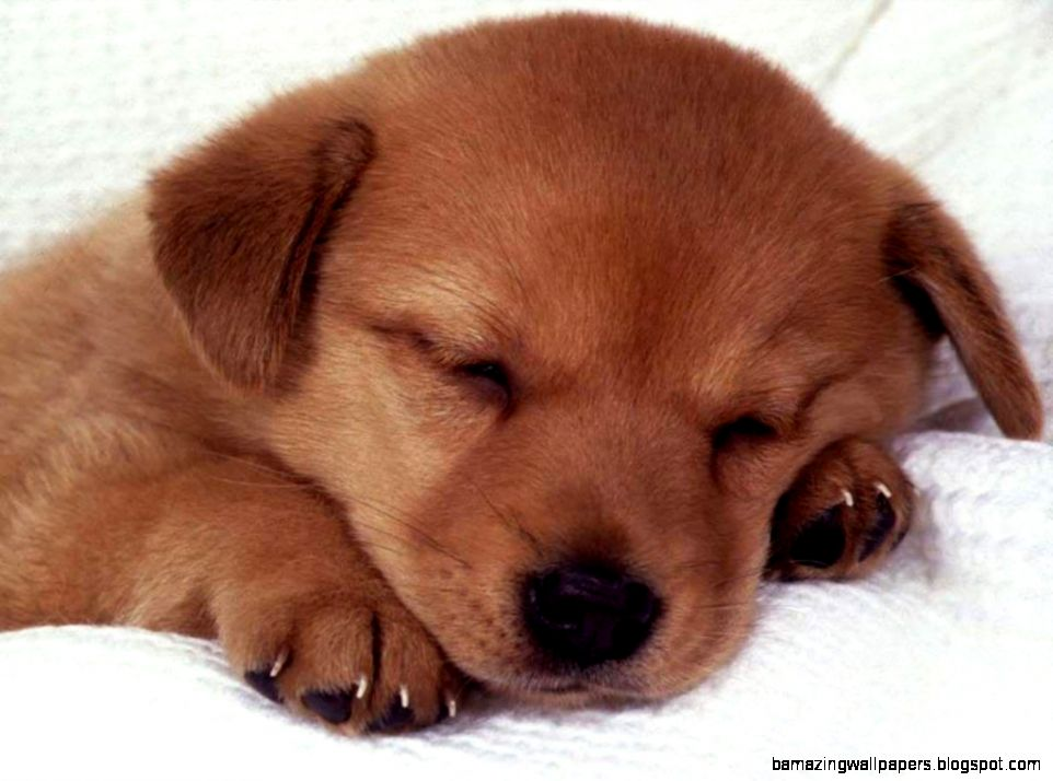 2 Cute Puppies sleeping together graphics and comments