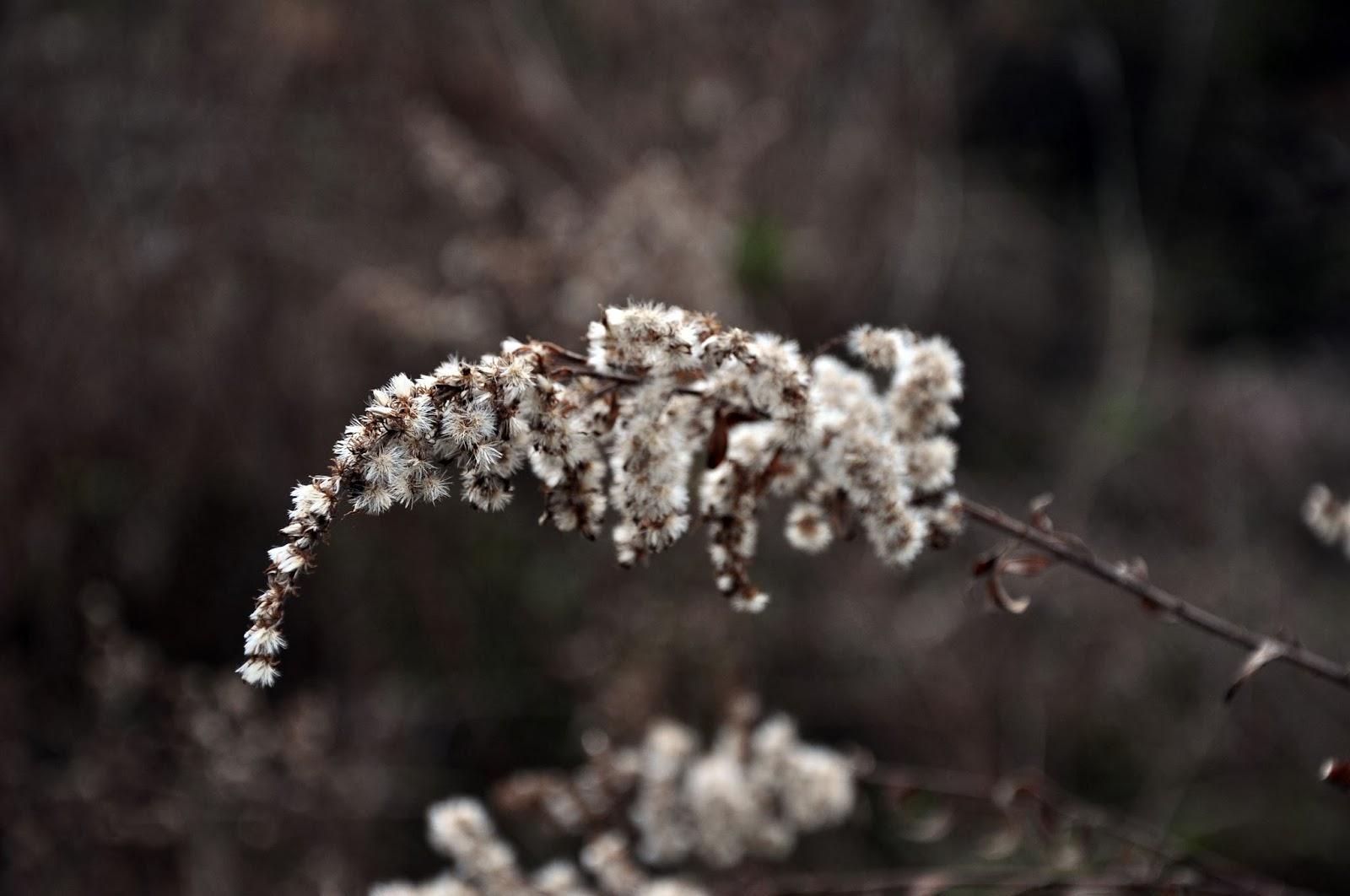 Wildflowers in Winter @ Hickory Ridge Stuio