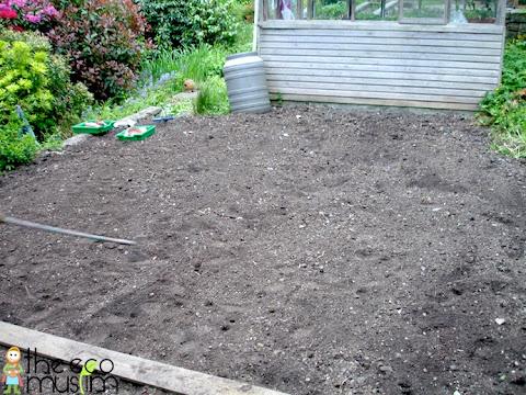 organic how to plant grow coriander herb garden british