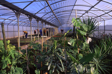 Ecologia viveros for Viveros de plantas de ornato