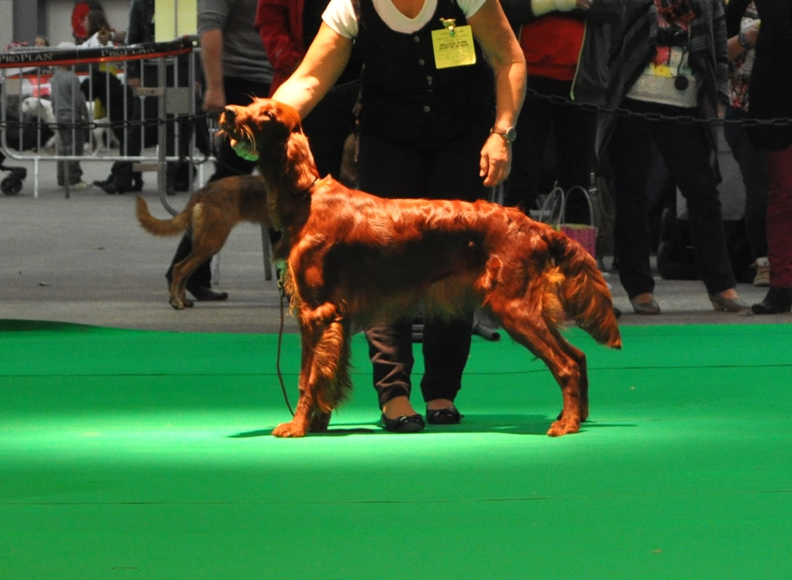 centrale canine besancon