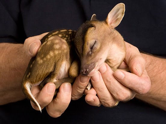 Bebes que lindos Animales-bebes-01