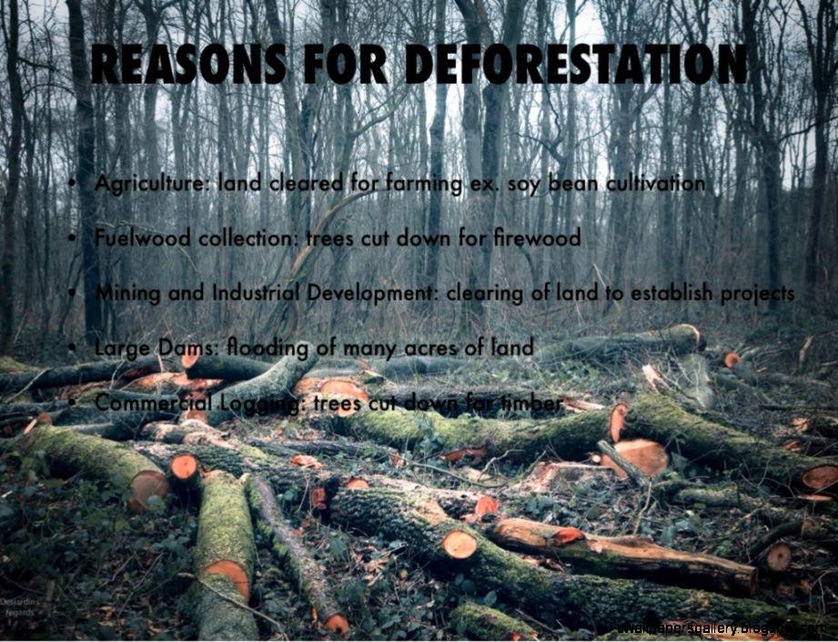 Rainforest Deforestation by Kasey