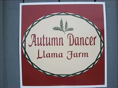 Autumn Dancer Llama Farm1