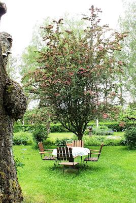 Vid matplatsen växer det fina prydnadsträdet rosenhagtorn.