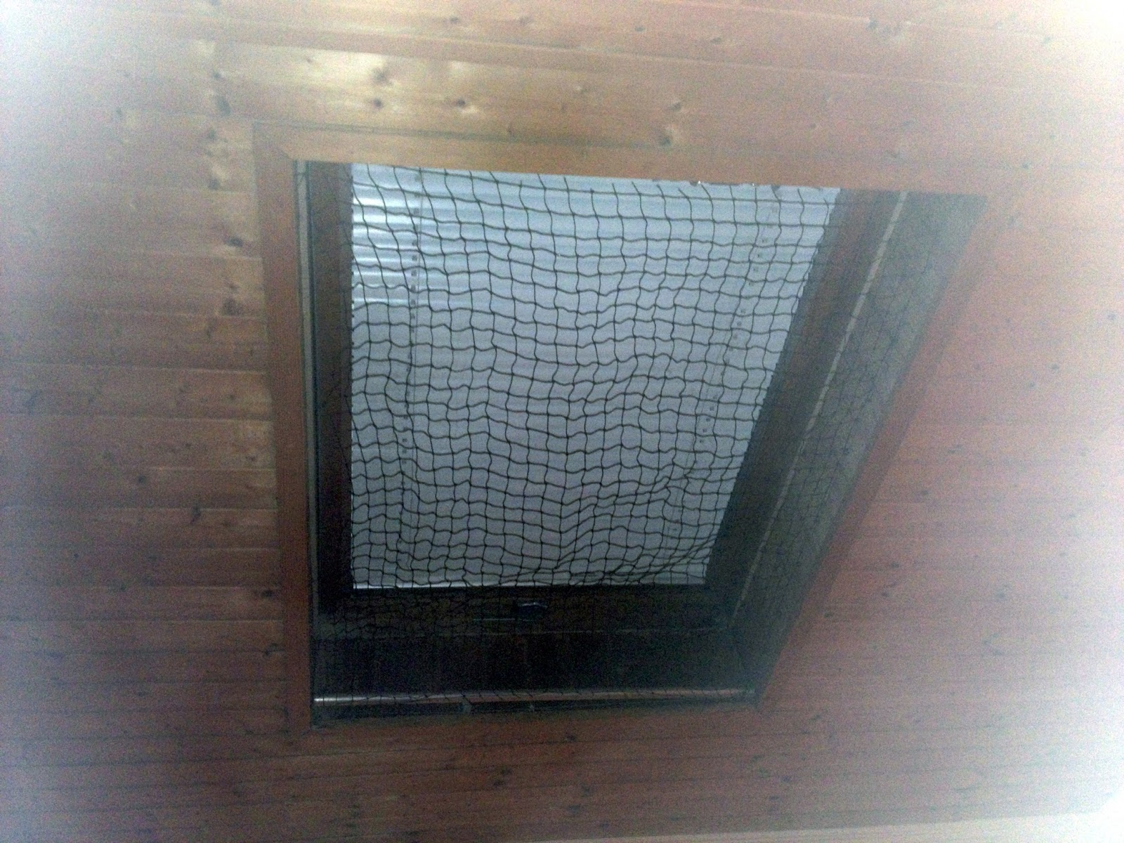 katzennetz nrw die adresse f r ein katzennetz katzennetz an velux fenster katzennetz f r. Black Bedroom Furniture Sets. Home Design Ideas