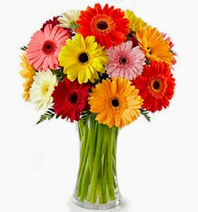 rainbow-gerbera-bouquet