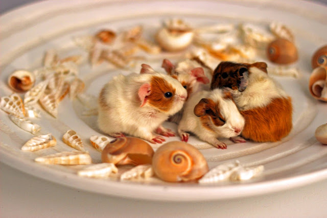 funny animal pictures, cute hamster