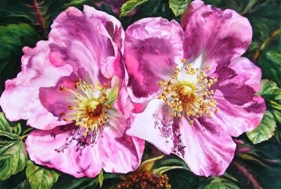 Sunny Alberta - Roses #14