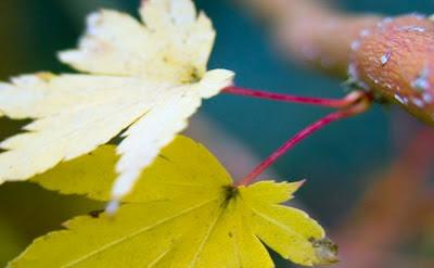 أوراق الشجر عن قرب - Leaves