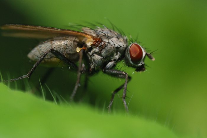Animal wildlife fly the fly is one of the most common and well known