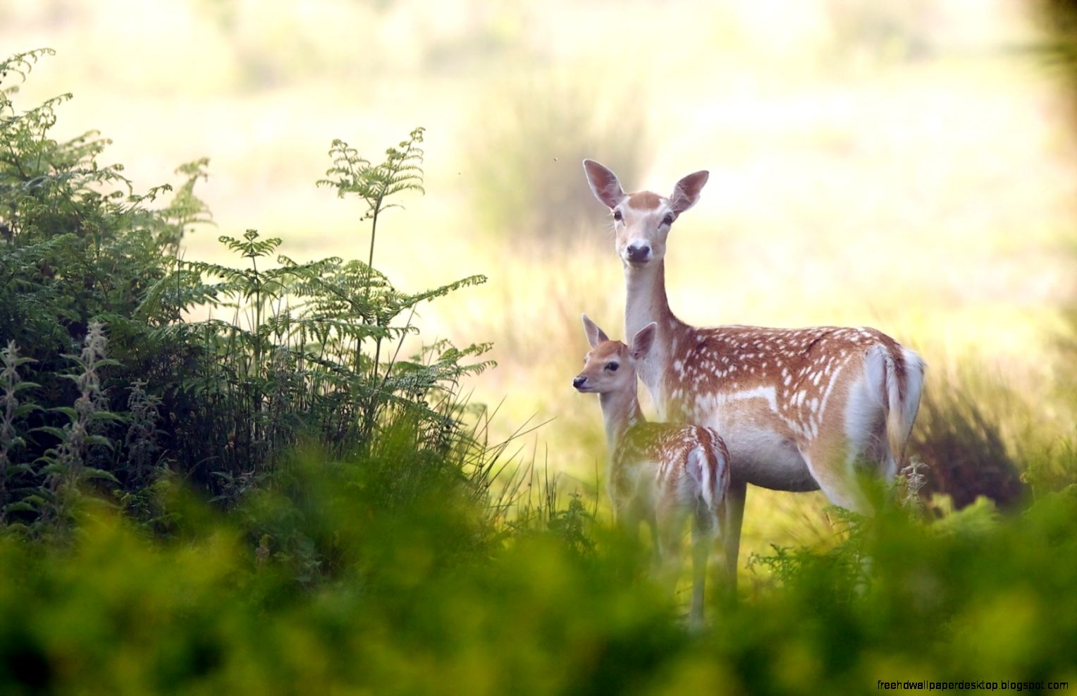 Deer Animals Nature Hd Wallpaper | Free High Definition ...