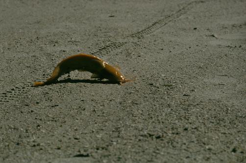 Walking Catfish Habitat - photo#10