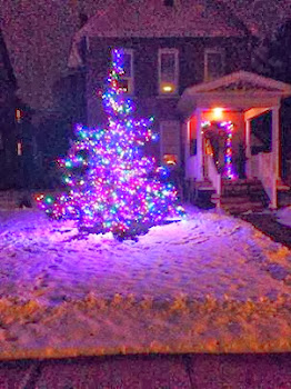 Local Gin Mill Owner Sports Nice Tree at Ten Eyck Street Home