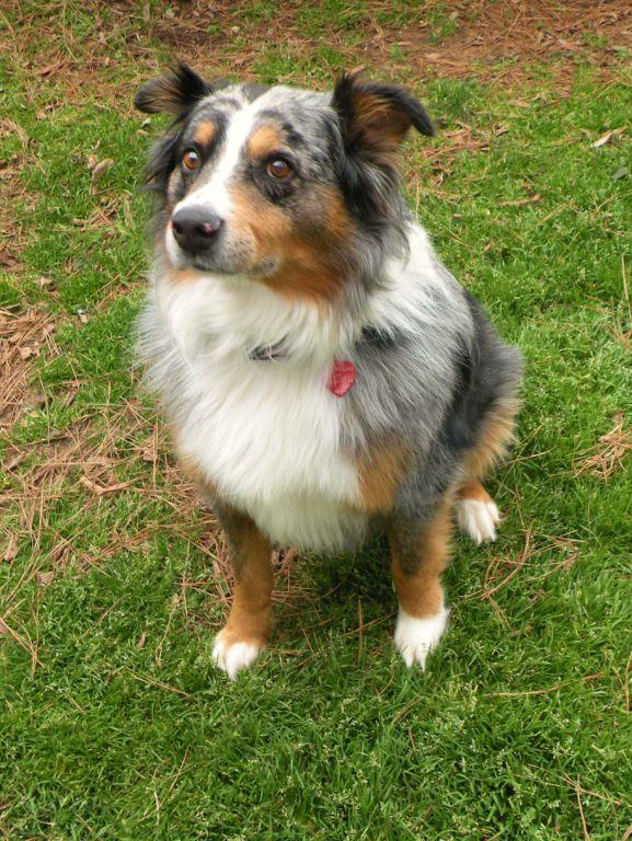 Senior Dog Rescue Nc