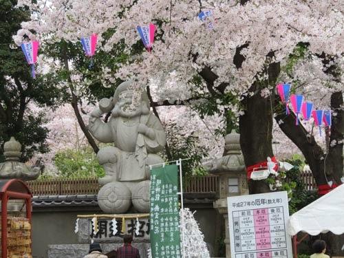 神田明神の桜04